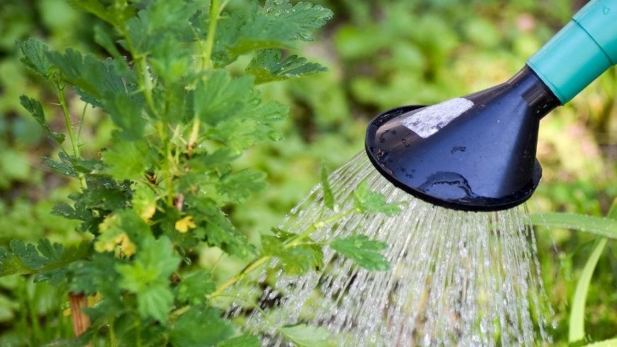 Zbiorniki na deszczówkę – dlaczego warto go mieć?
