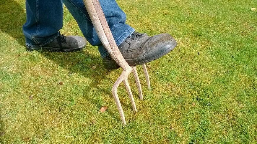 Jak usunąć mech z trawnika?